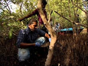 How Can Conserving Mangroves Tide Over Climate Change